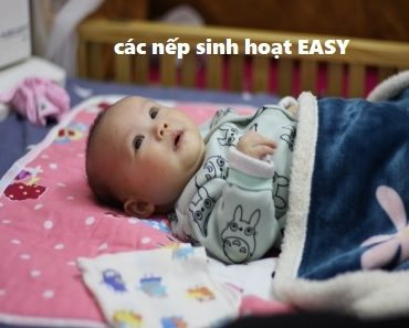 cac-nep-sinh-hoat-easy